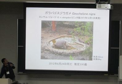 14C.life span of the giant tortoise.Geochelone nigra.加藤英明HideakiKato.jpg