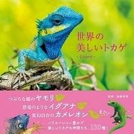 世界の美しいトカゲ.加藤英明.jpg