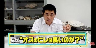 加藤英明.HideakiKato.ユーチューブ.メダカ.オスとメスの見分け方.11.jpg