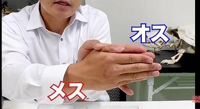 加藤英明.HideakiKato.ユーチューブ.メダカ.オスとメスの見分け方.14.jpg