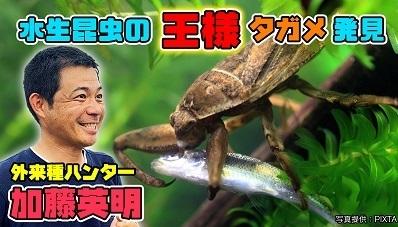加藤英明ユーチューブ.タガメ.HideakiKato.探検隊.jpg
