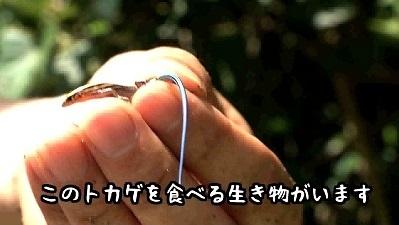 加藤英明探検隊.石垣島3.jpg