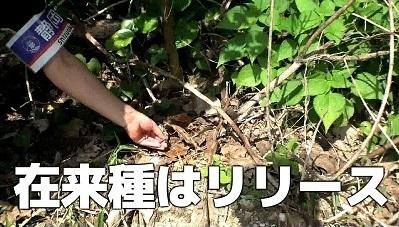 加藤英明探検隊.石垣島4.jpg