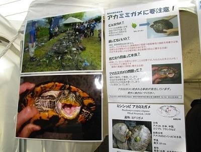 静岡産業フェア2015アカミミガメ啓発.静岡大学加藤英明HideakiKato4.jpg