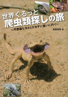 オオクチガマトカゲPhrynocephalus mystaceus.2.jpg
